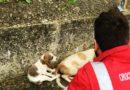 La Cri di Avigliano salva due cani lungo la E45: protagonista il presidente Matteo Sciarrini