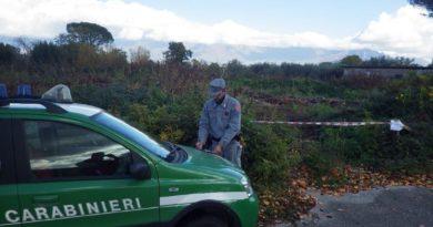 Creano strada abusiva in una zona boschiva senza nessuna autorizzazione, nei guai tre uomini